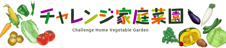 チャレンジ家庭菜園